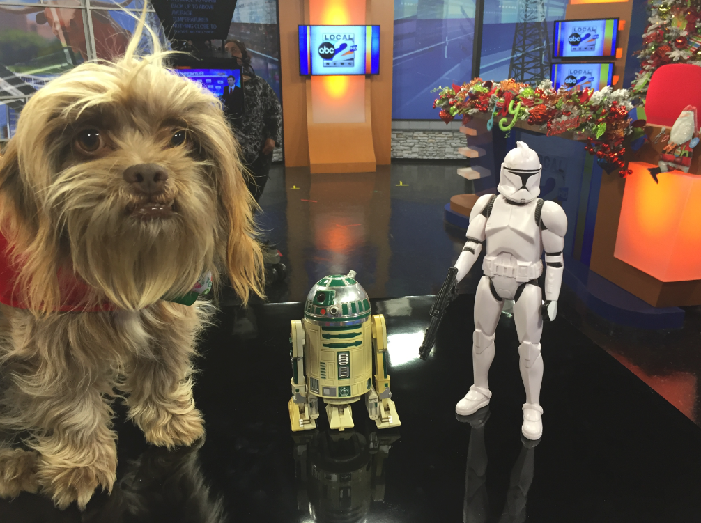 FOREVER HOME Chewbacca