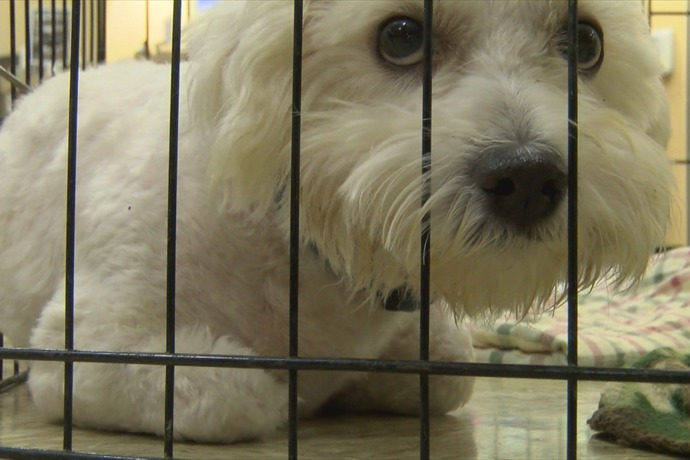 P-Animal Shelter Overcrowding_3667205088136545862