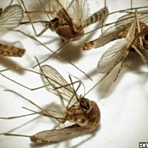 Zika_1470261238275.jpg