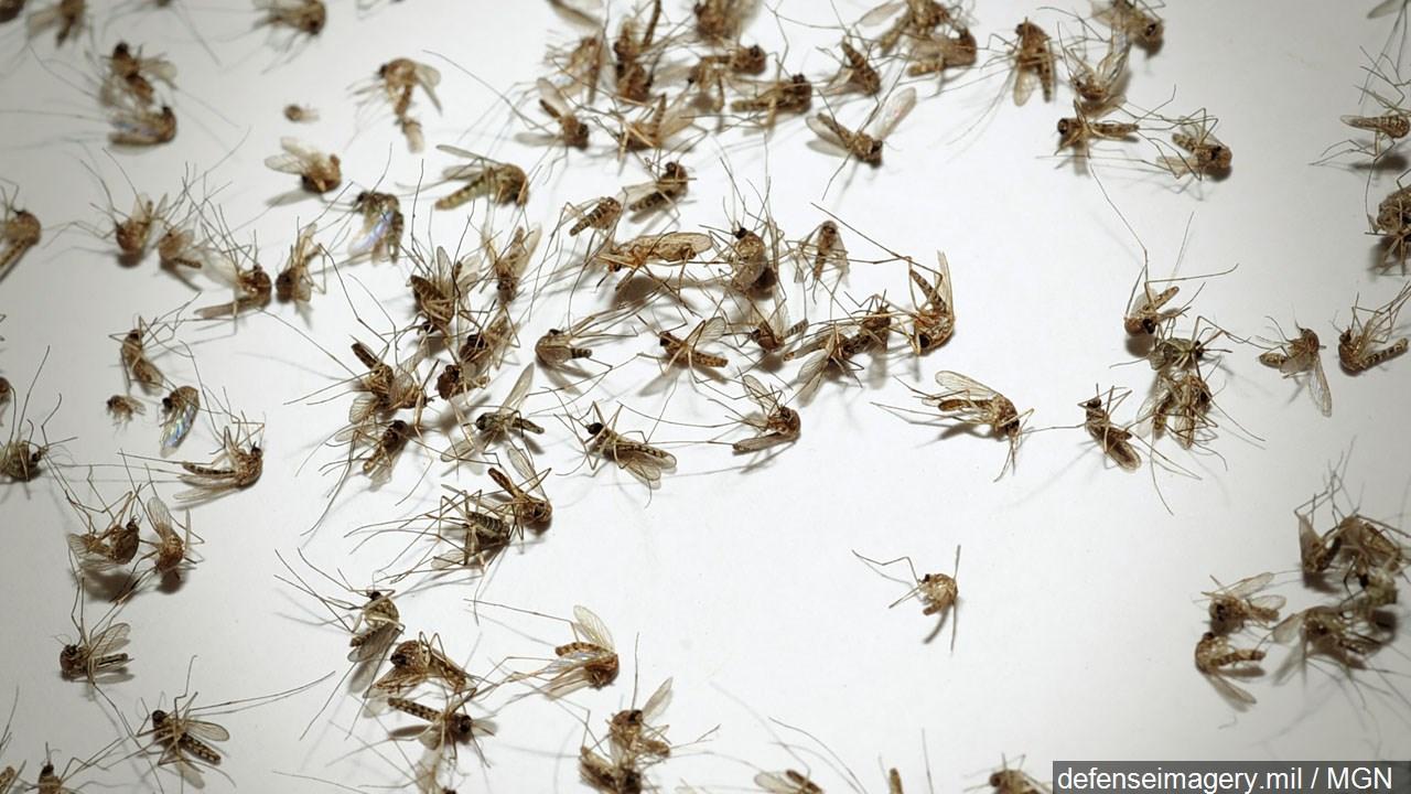 Zika_1471298639612.jpg