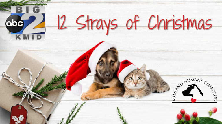 12-strays-2018_1543855343101.png