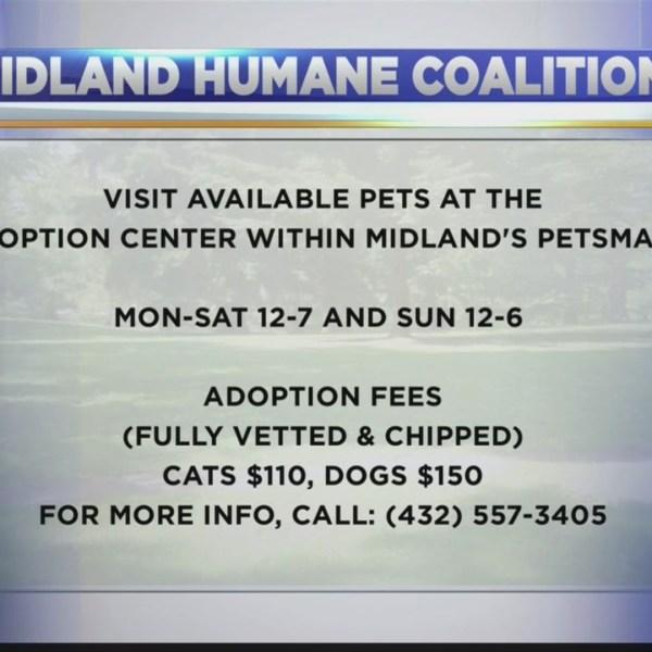 Midland Humane Coalition on Good Morning Basin 1-4-2018