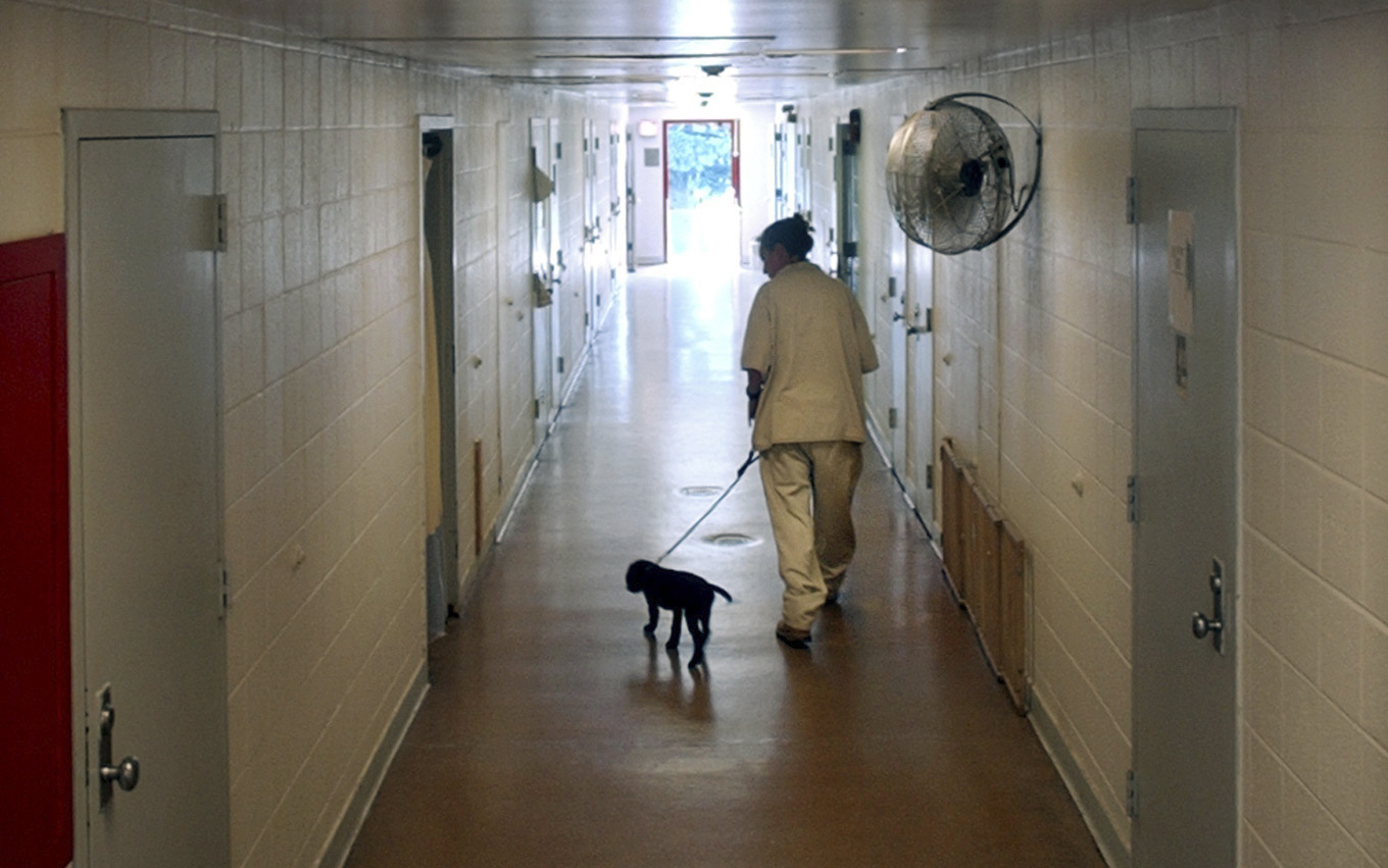 INMATE WALKS PUPPY DOWN CELL BLOCK